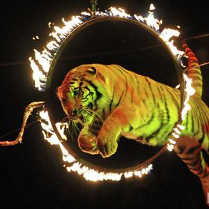 Цирки Оханска