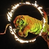 Цирки в Оханске