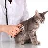 Ветеринарные клиники в Оханске